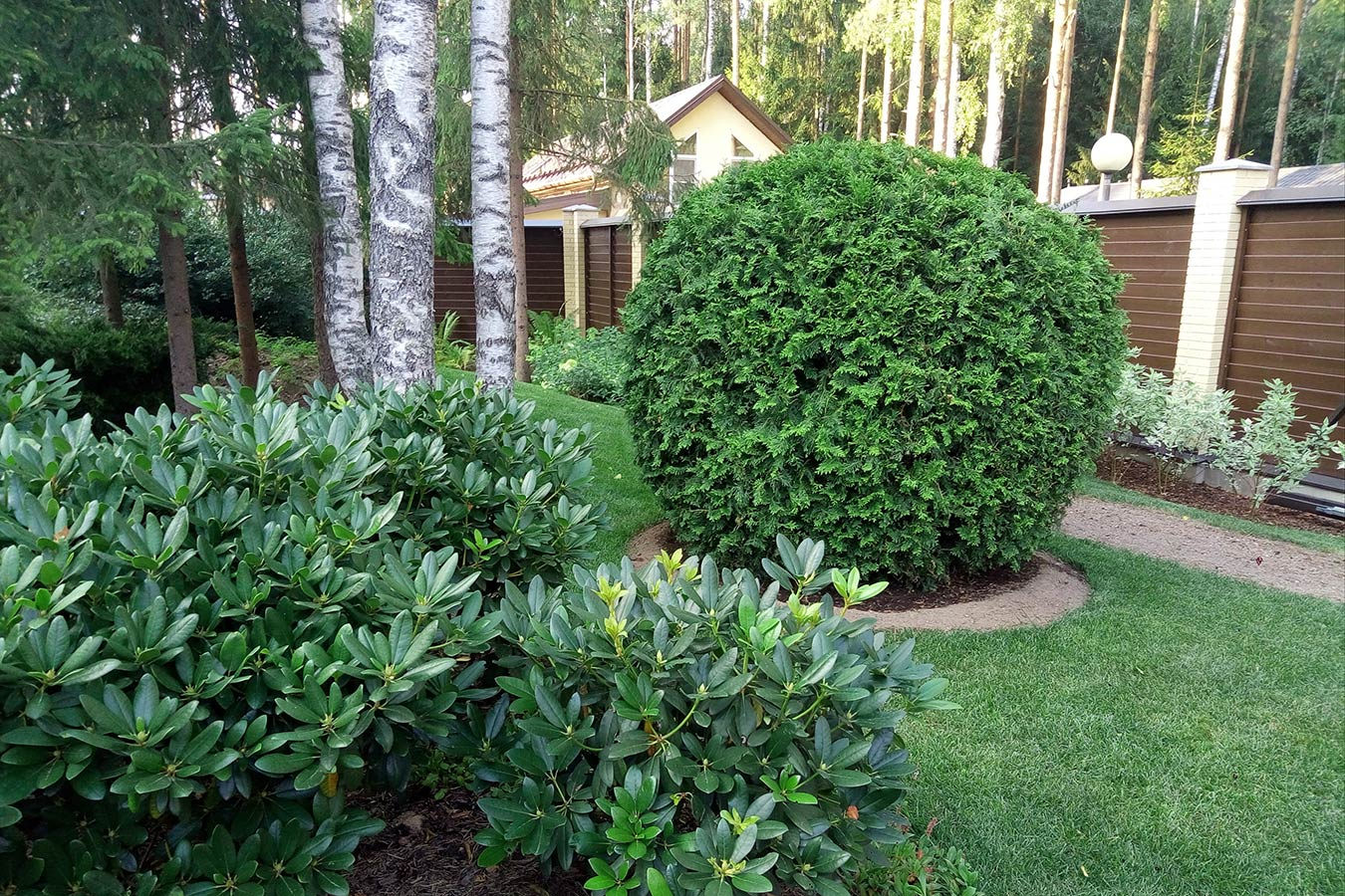 beautiful landscaping in a yard