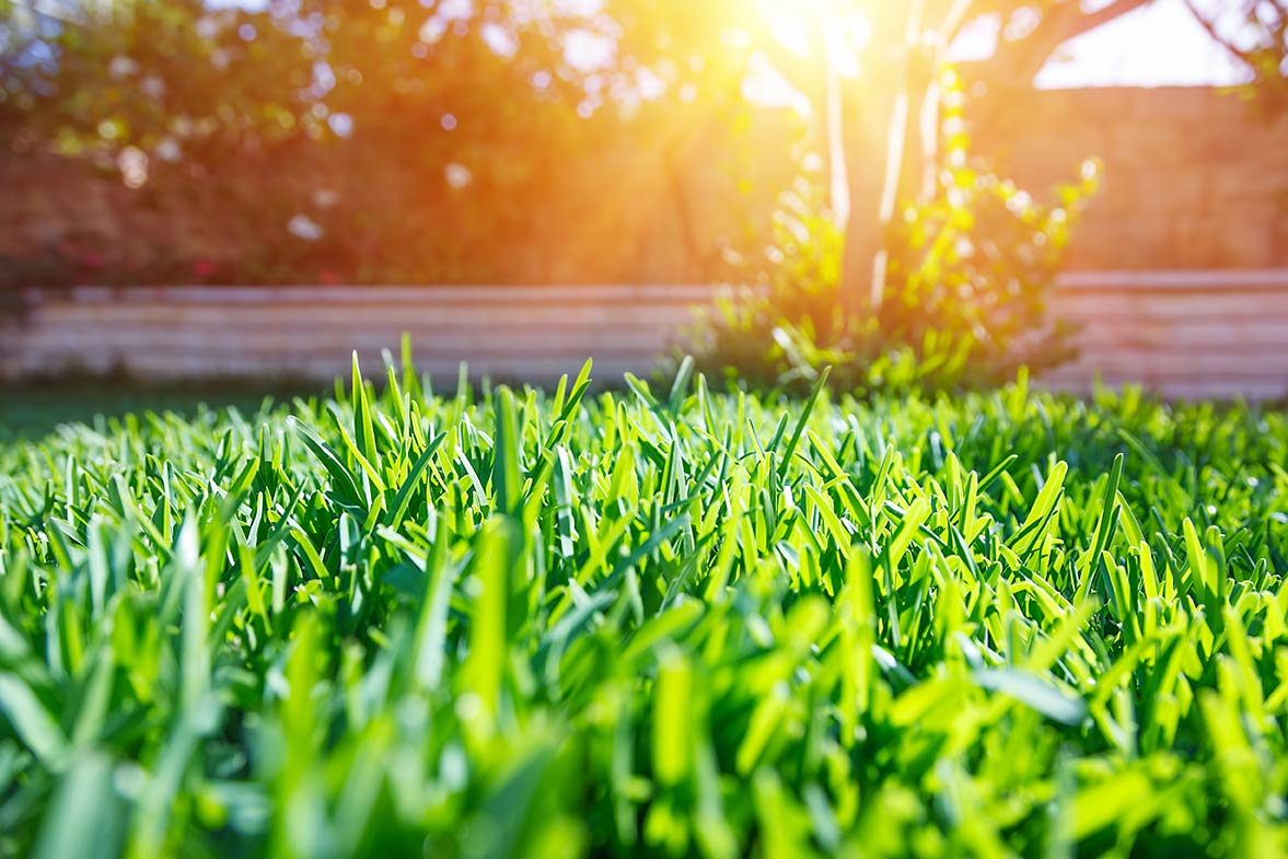 a back yard lawn at sunset