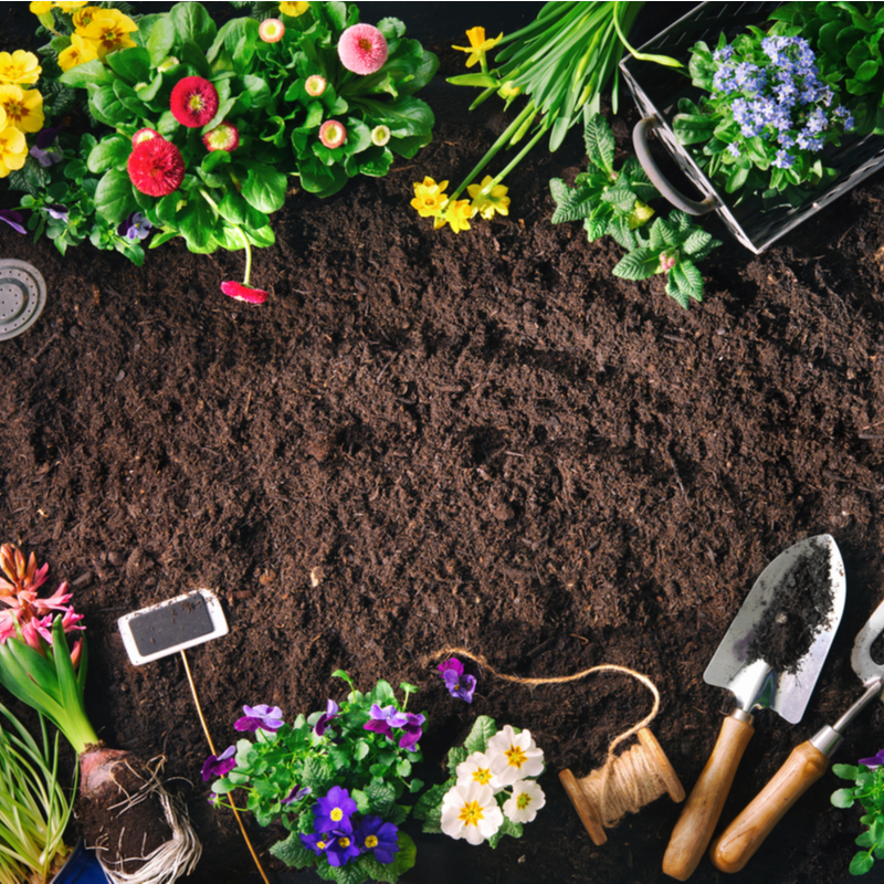 garden soil with tools and flowers