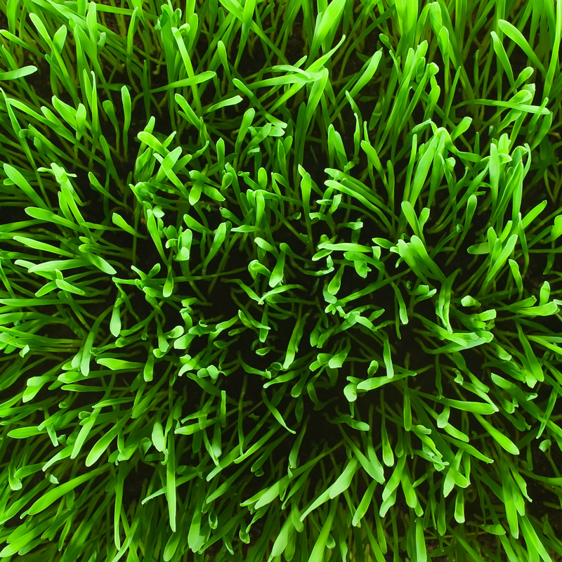 healthy lawn top view